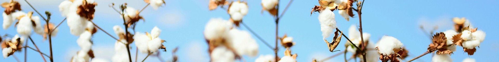 Voile Cotton